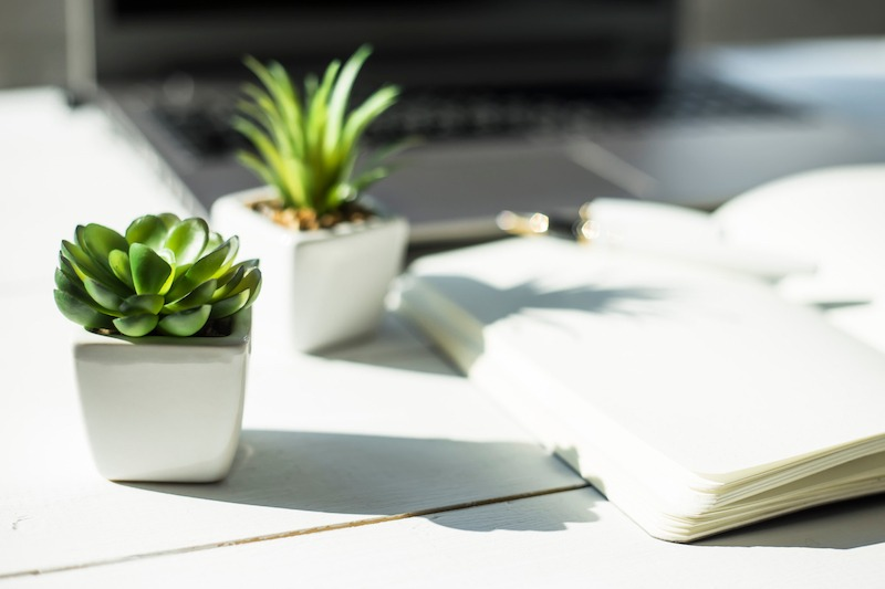 Two succulent plants placed on a desk